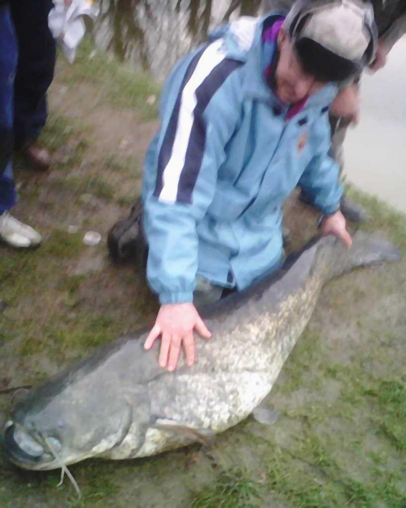 23-01-09 monti meldola siluro 60 kg