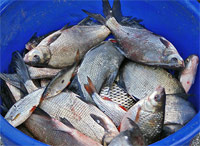 fishbucketP7965