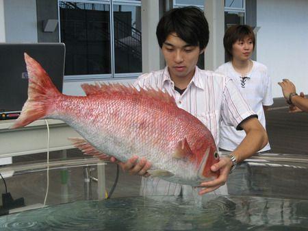 pesce_robot